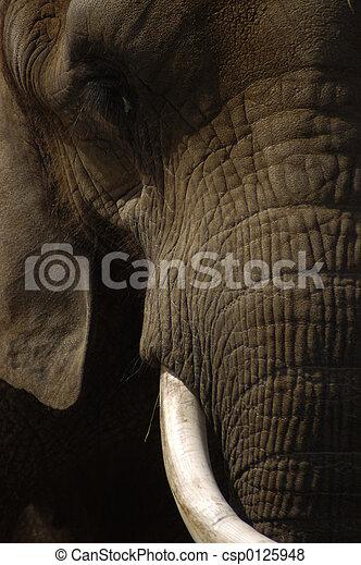 Elephant Face - csp0125948