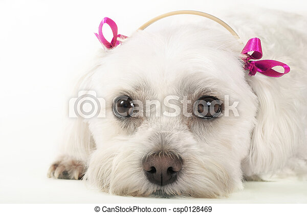 Pampered Pooch - csp0128469