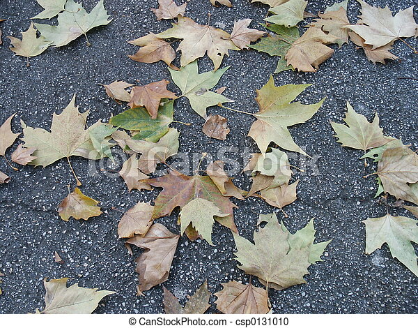 leaves 4 - csp0131010