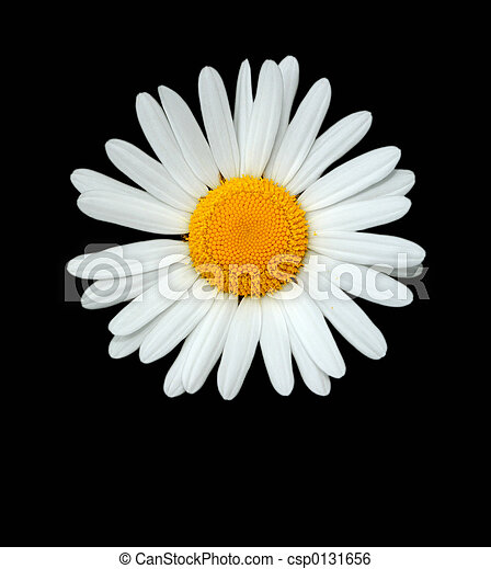 The Daisy - csp0131656
