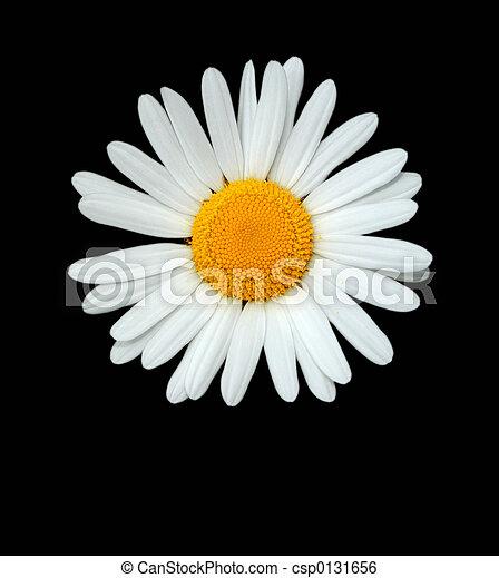 The Daisy - csp0131656