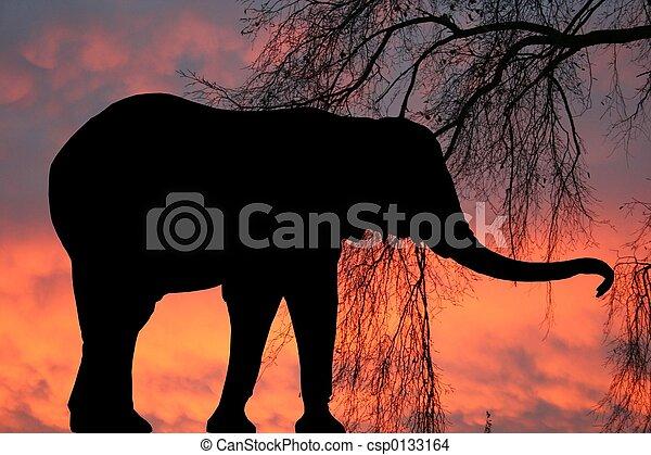 Elephant at sunrise - csp0133164