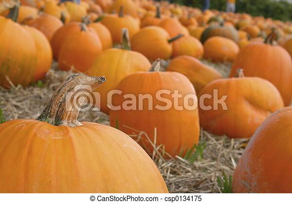 Harvest 7031 - csp0134175