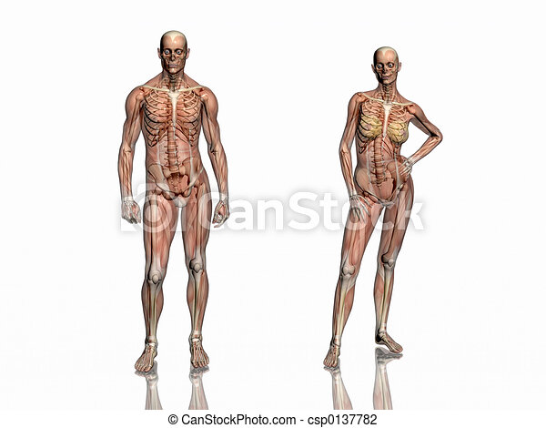 Anatomy, transparant muscles with skeleton. - csp0137782