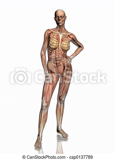 Anatomy, transparant muscles with skeleton. - csp0137789