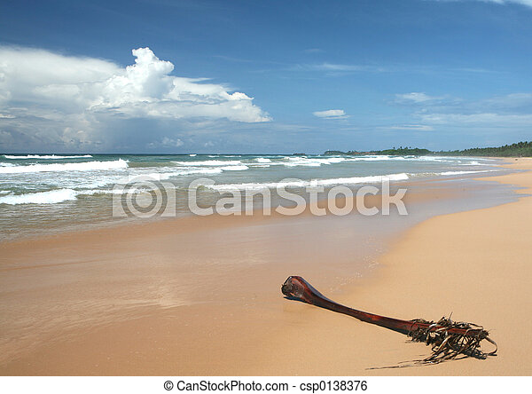 Tropical beach and palm frond - csp0138376