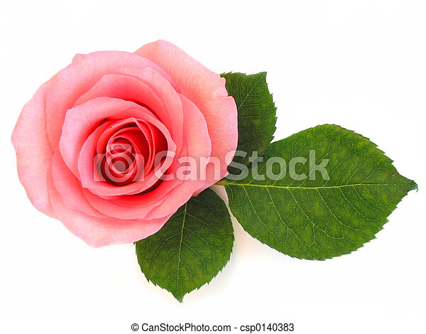 Isolated pink rose with green leaf - csp0140383