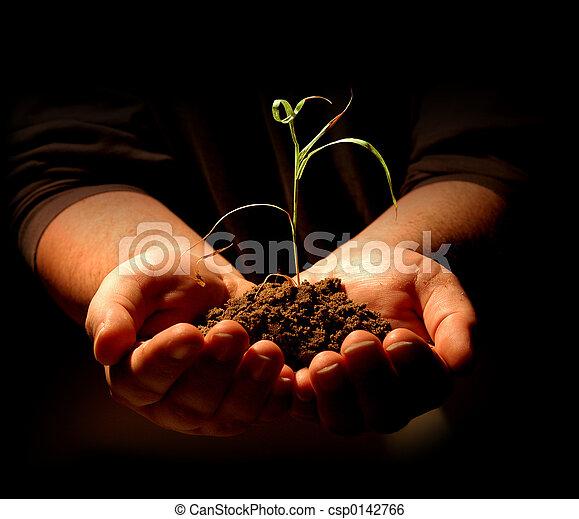 mãos, segurando, planta - csp0142766