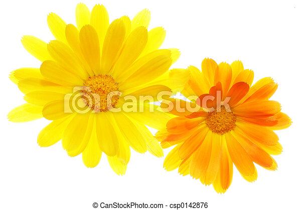 Flower - csp0142876