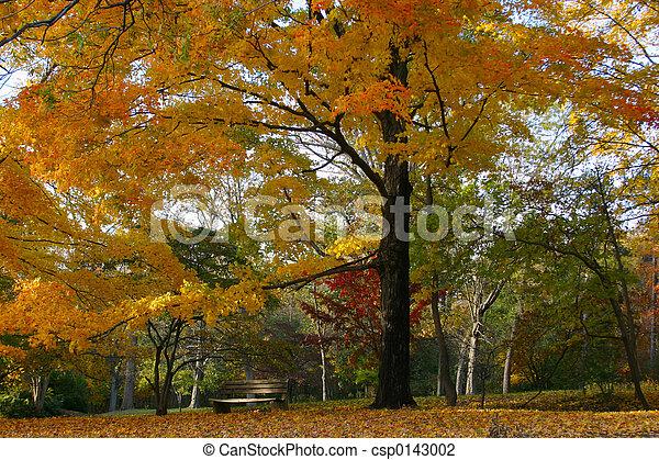 Perfect Fall Setting - csp0143002
