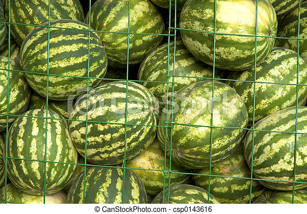 water-melons - csp0143616