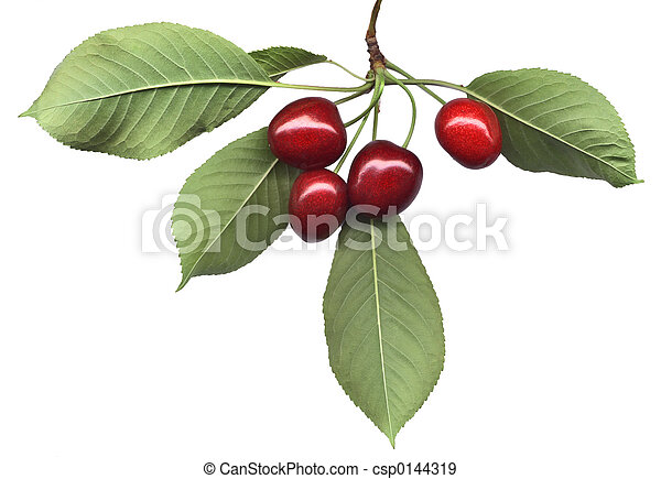 Cherry bunch with leaves