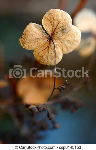 flowers and leaves in autumn