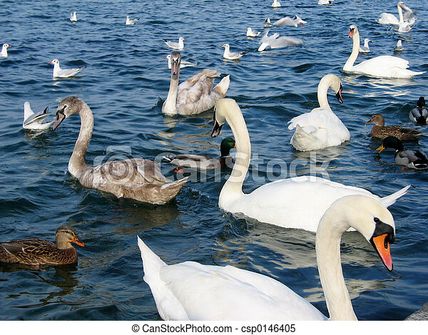 Birds at Lake - csp0146405