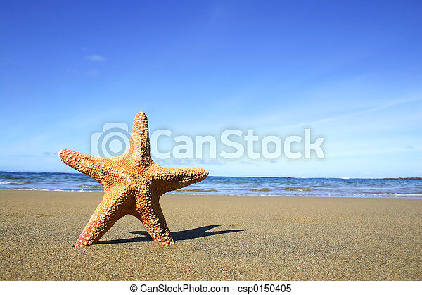 Beach Starfish - csp0150405