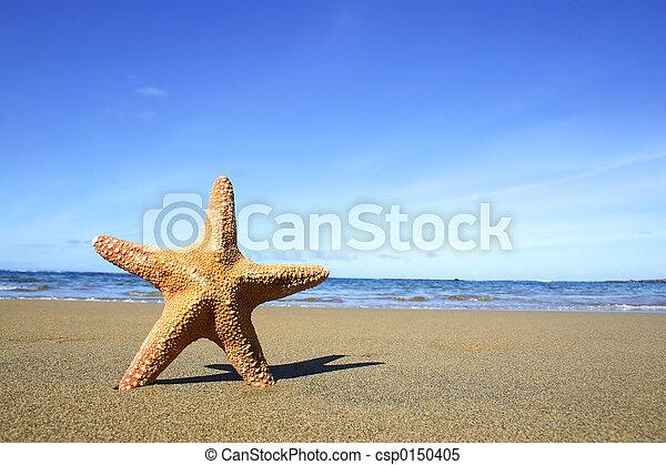 Beach Starfish - csp0150405