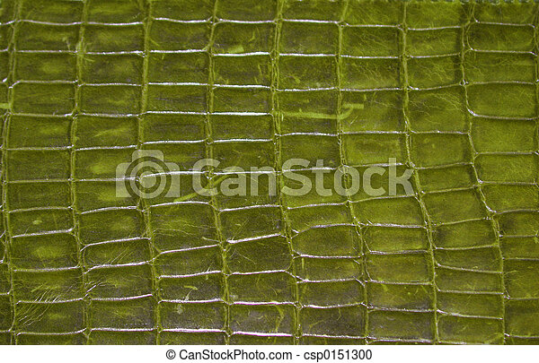 Reptile skin - csp0151300