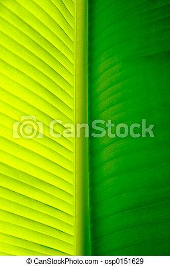 palm tree leaf - csp0151629