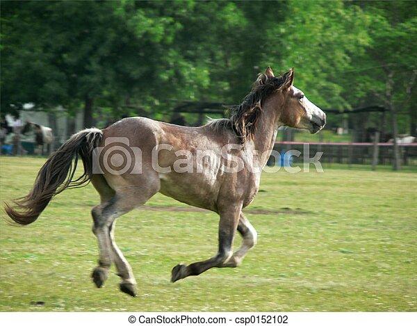 野生, 馬, 逃げる - csp0152102 若い, 野生, 馬, つらい, 脱出, gauc