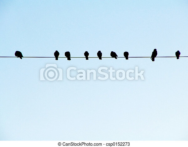 Birds on a Wire - csp0152273