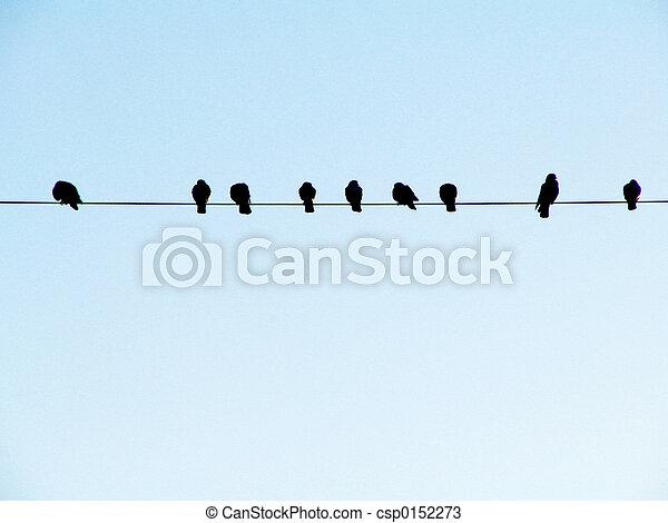 Birds on a Wire - csp0152273