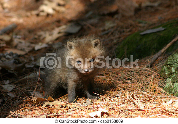 a baby fox near it\'s den