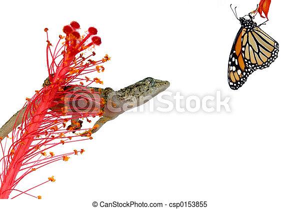 Gecko and Prey - csp0153855