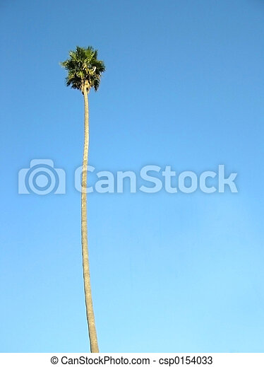 Single palm tree pictures - scholastic images letterman jackets company