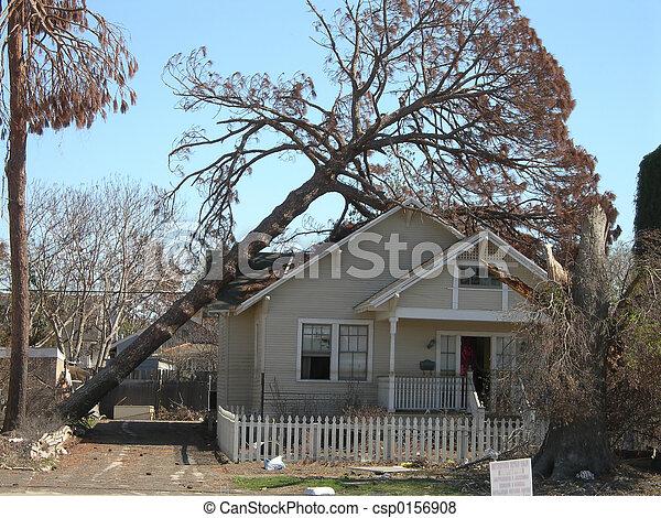 Tree Fall - csp0156908