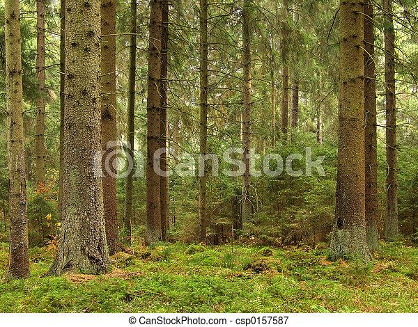 green forest - csp0157587