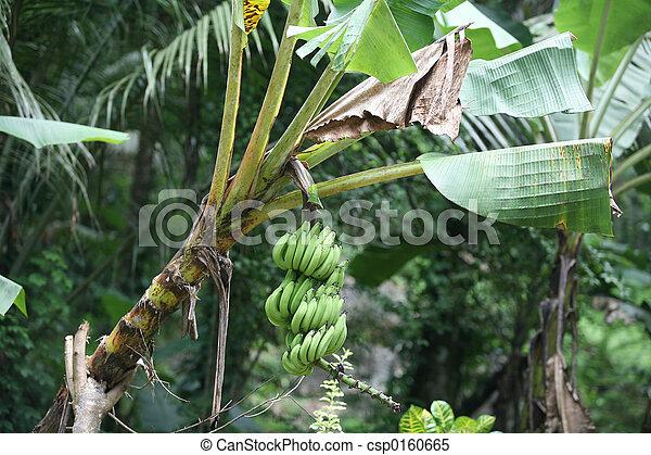 stock foto stra enrand banane pflanze stock bilder. Black Bedroom Furniture Sets. Home Design Ideas