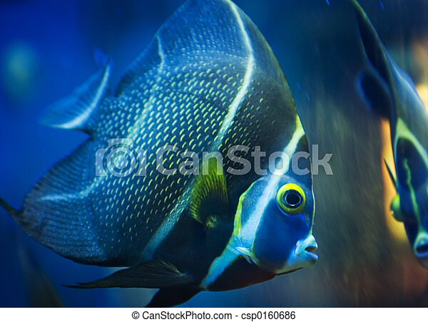 Tropical Fish - csp0160686