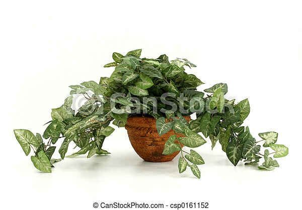 Artificial House Plant - csp0161152