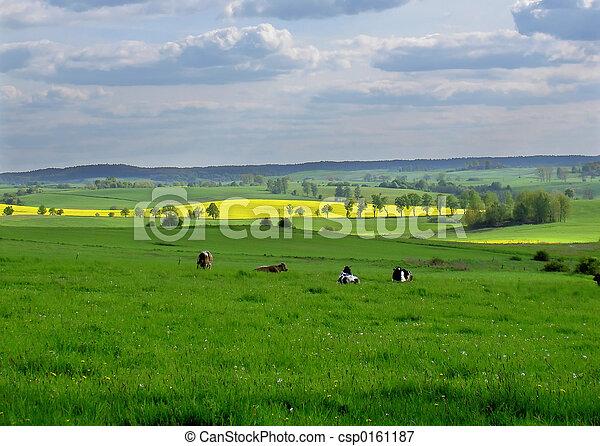 spring fields - csp0161187