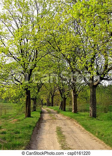 spring road - csp0161220