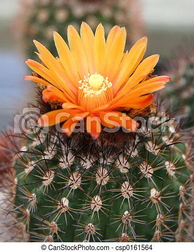 Cactus Bud - csp0161564