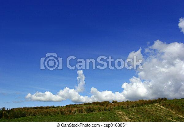 Reeds On A Hillside - csp0163051