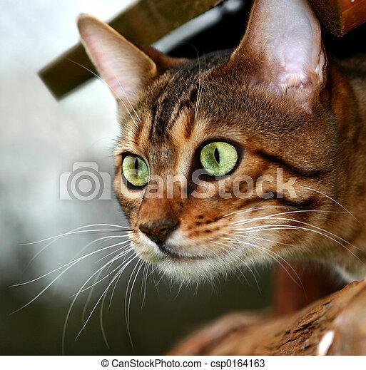 Killer Cat - csp0164163