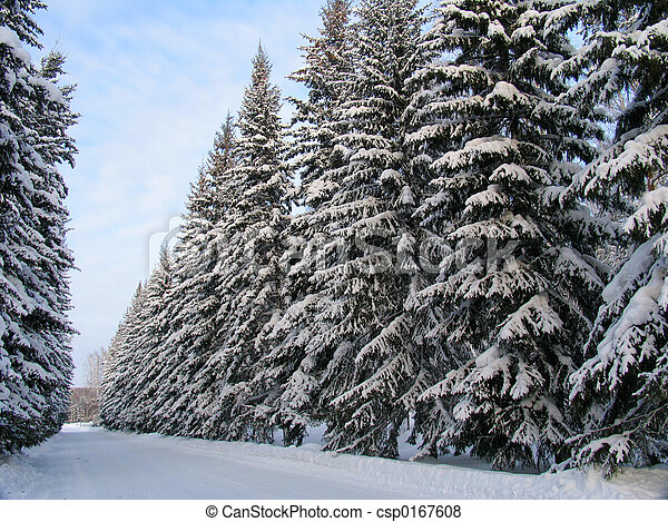 Fir trees under the Snow - csp0167608