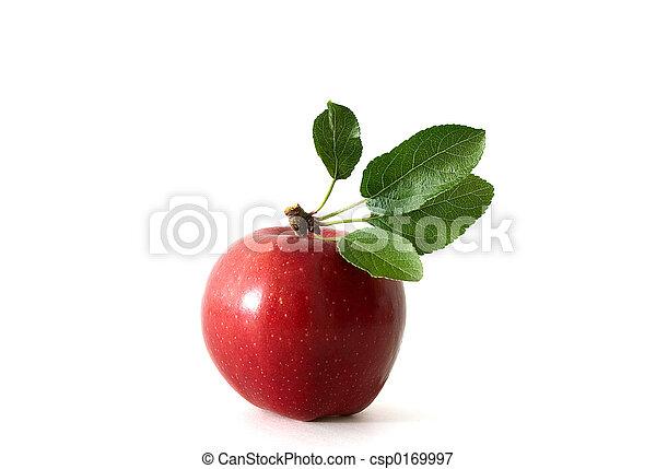 Apple - csp0169997