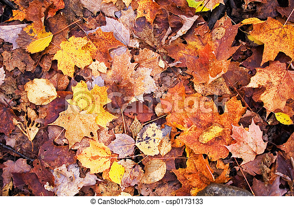 A lot of autumn leaves