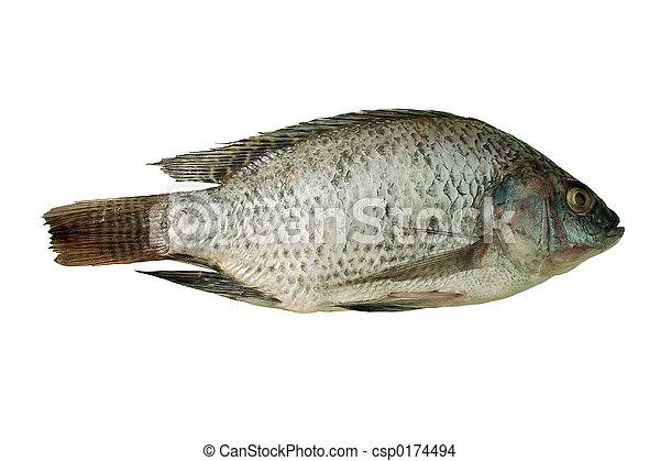 pez - csp0174494