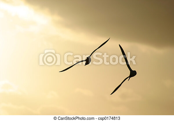 madarak, tenger - csp0174813