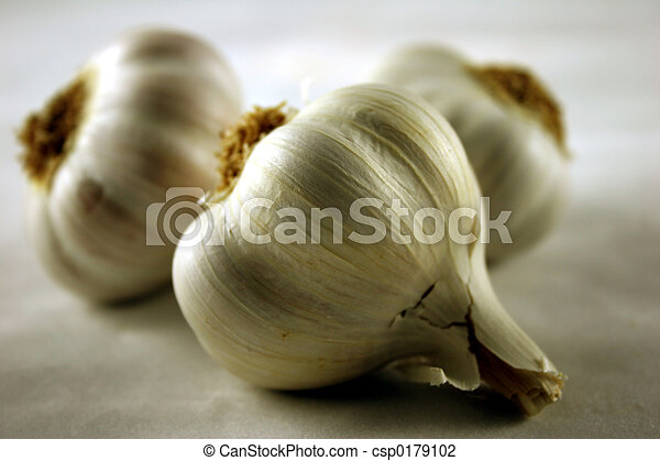 Garlic - csp0179102
