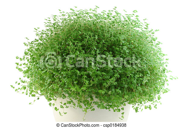 Plants Top View White Background Plant on White Background
