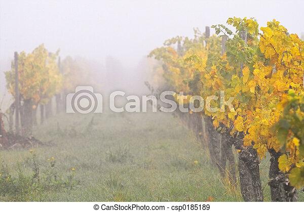 Fog in wineyards - csp0185189