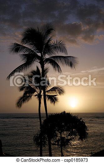 Hawaiian Sunset - csp0185973