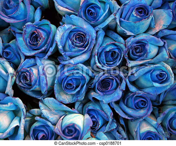 Blue roses - csp0188701