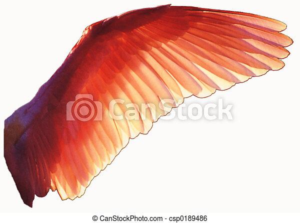 Bird wing - csp0189486