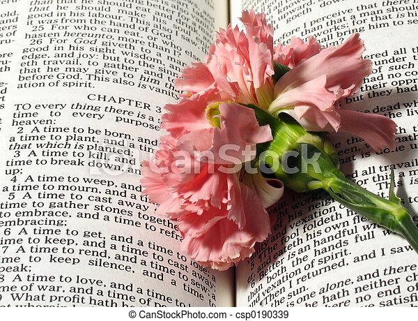 religion bible verse - csp0190339